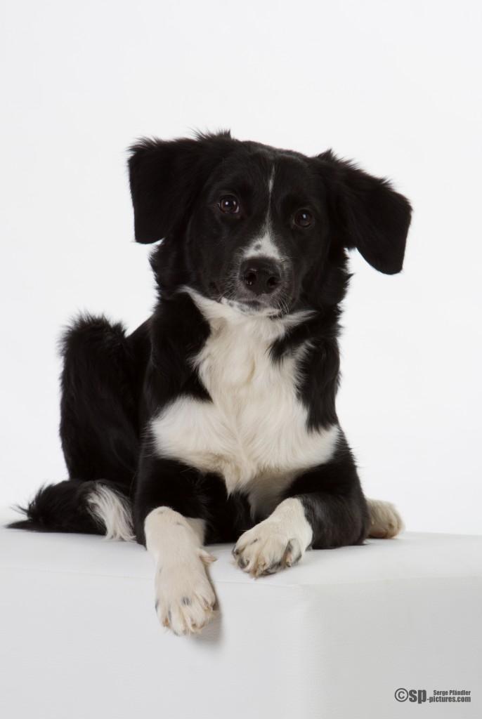 Hunde (58 von 109)