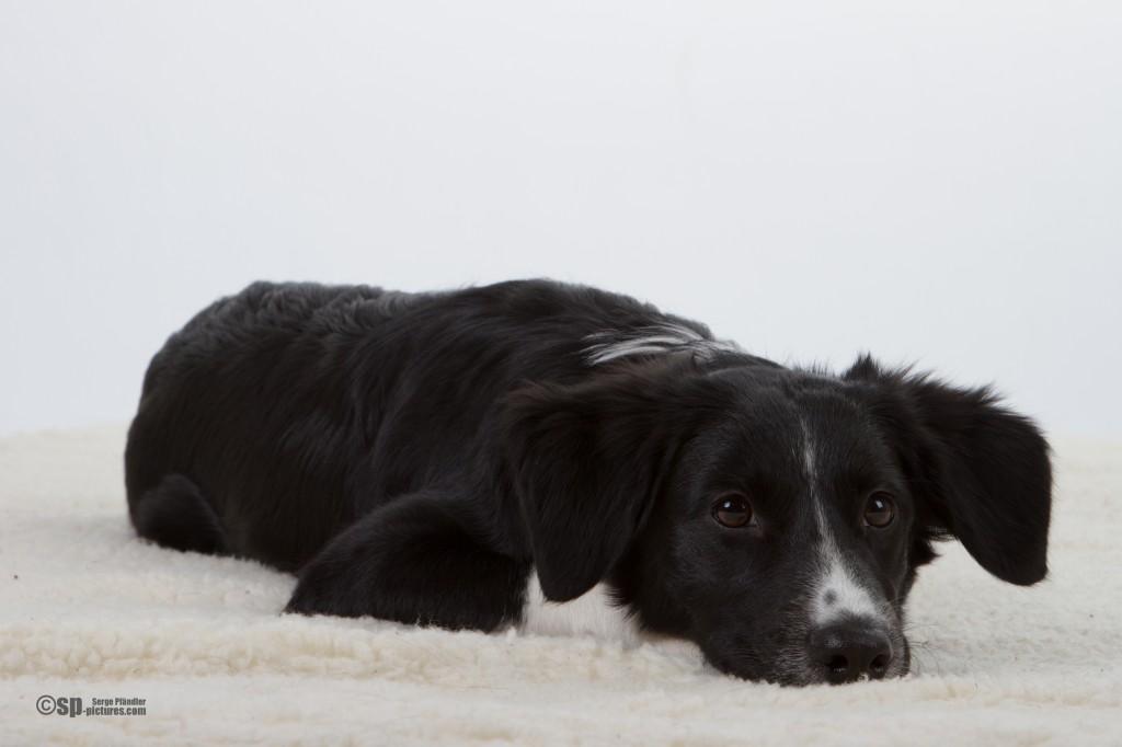 Hunde (64 von 109)