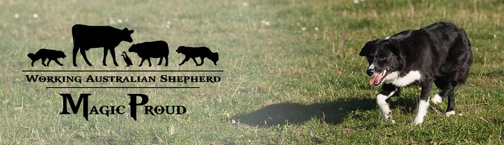 MagicProud Australian Shepherds